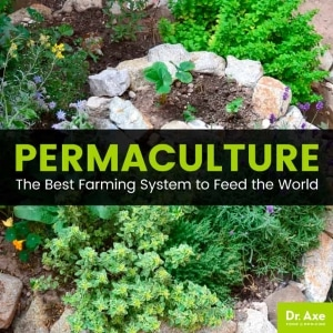 Picture of a permaculture rock garden.