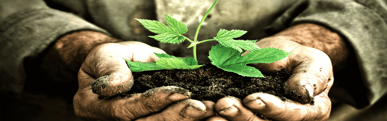 A close up of a man with ground dirt on his hands holding a seedling in dirt in his hands.
